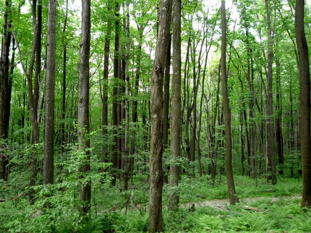 Los bosques como prioridad para Apple.