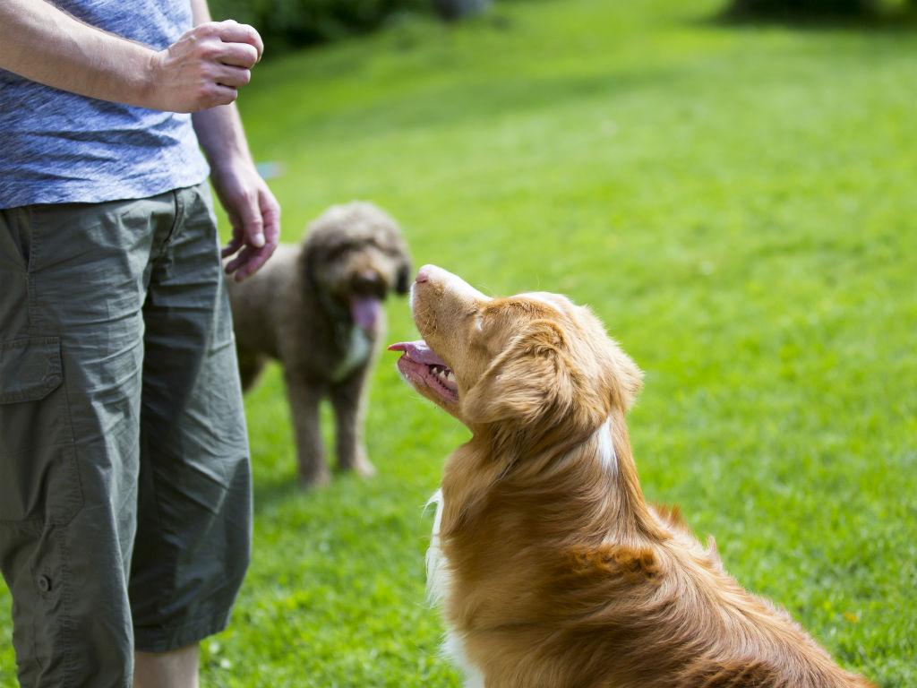 Enseña a tu mascota a comportarse como un profesional.
