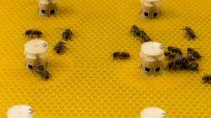 abejas robot