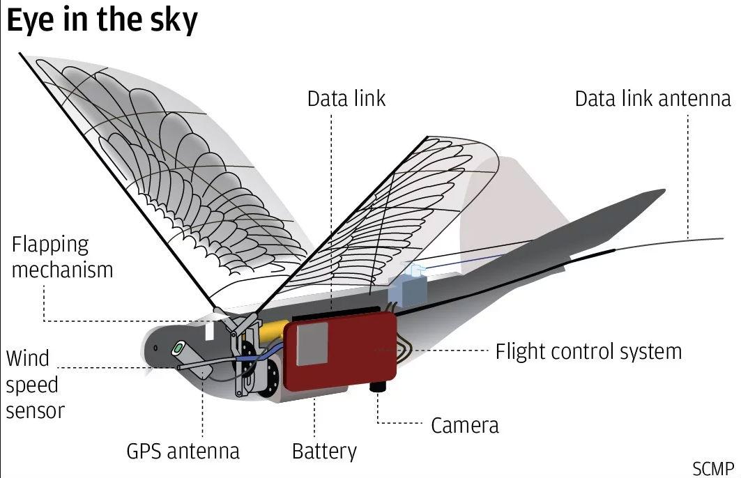 Pájaro Espía China