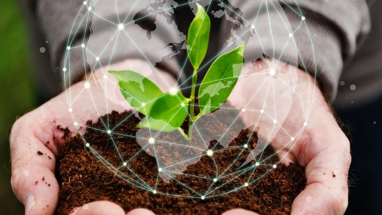 Startup Agrotech