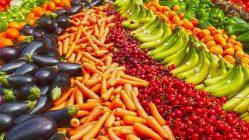alimentar el mundo