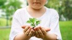 treedom, startup, sostenibilidad, medio ambiente